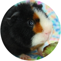 """Oliver, aka """"Tiny Pig"""""""